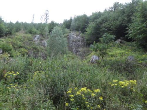 Direkt zu Beginn zeigt der Harz seine Hänge von der schönen Seite.