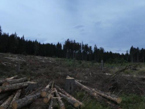 Leider alles abgeholzt.