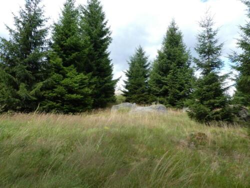 Wiese und Bäume
