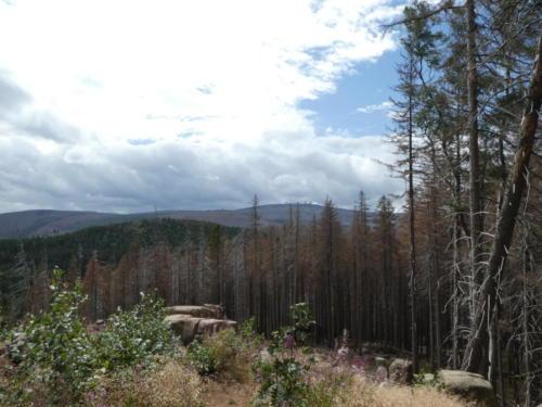 Blick über den Harz vom Wolfsberg