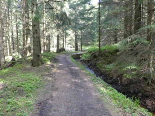 Weg entlang des Dammgraben