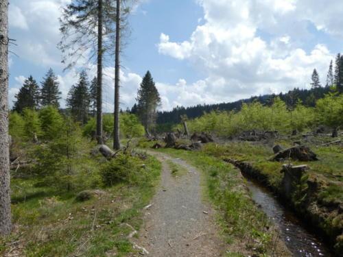 Dammgraben und Sturmschäden am Wald