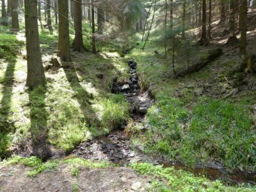 Zufluss zum Dammgraben