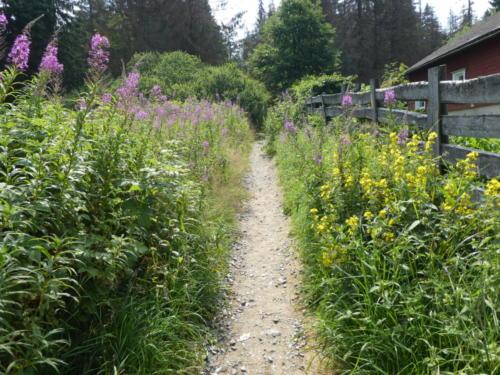Blumen entlang des Wanderweges