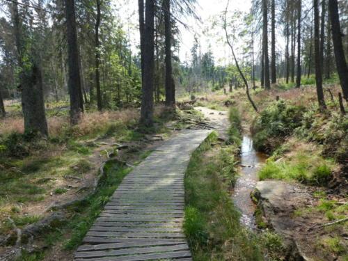 Entlang eines Grabens geht es über Stege und Wanderpfade