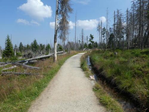 Wanderweg durch toten Wald