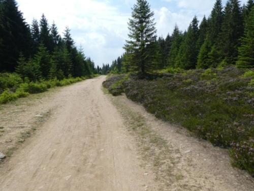 Ehemalige innerdeutsche Grenze. Deutlich erkennbar die breite Schneise ohne Bäume