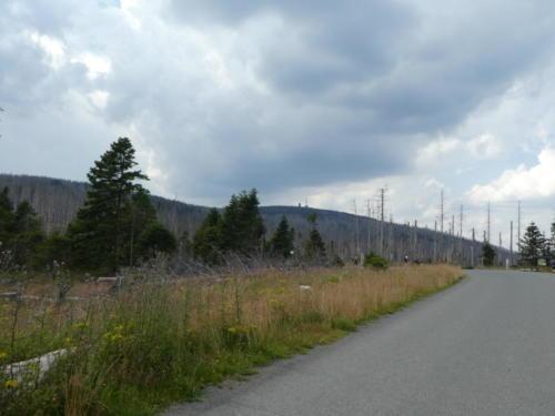Abstieg vom Brocken über die Brockenstraße