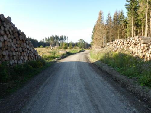 Kahlschlag im Wald hinter Drei Annen Hohne