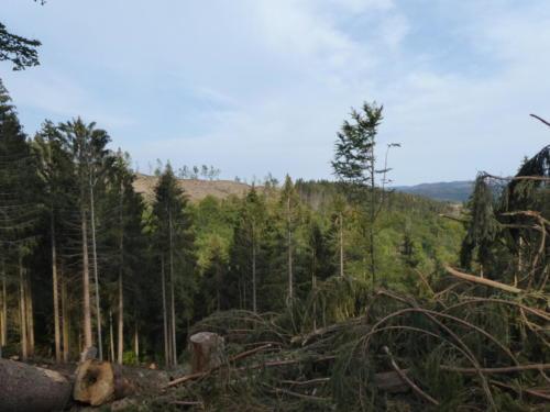 Toter Wald oberhalb des Innerstestausee