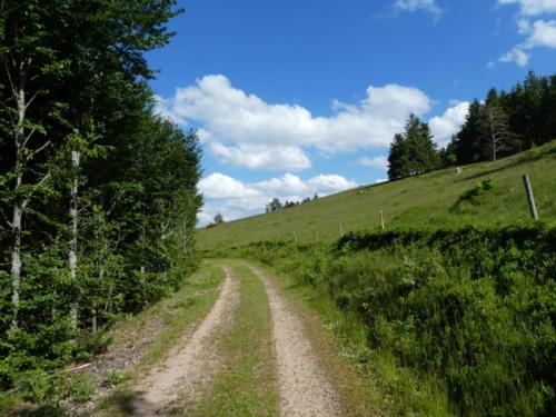 Wanderweg entlang einer Kuhweide
