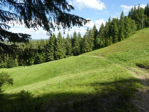 Der Wanderweg führt einmal quer über den Skihang