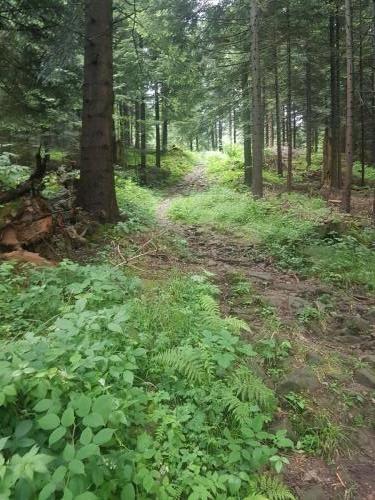 Schöner (steiniger) Wanderweg