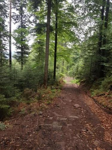 Steiniger Wanderweg im Schwarzwald