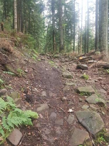 Sehr steiniger Wanderweg im Schwarzwald