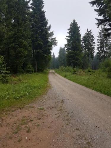 Wanderweg im Schwarzwald