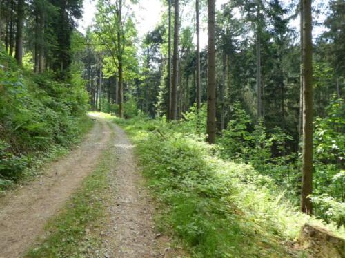 Ab geht es in den Wald