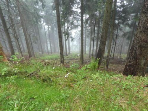 Blick in den Wald beim Abstieg der Badener Höhe