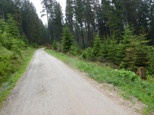 Waldweg beim Abstieg der Badener Höhe