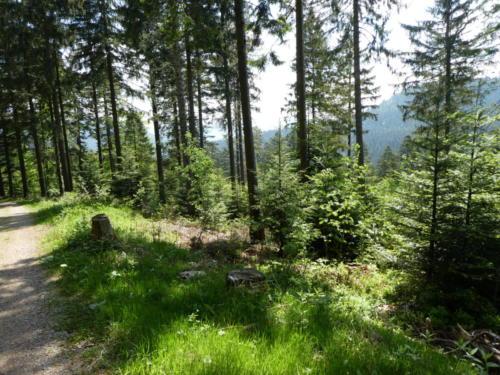 Blick in den Schwarzwald Richtung Gressbachtal