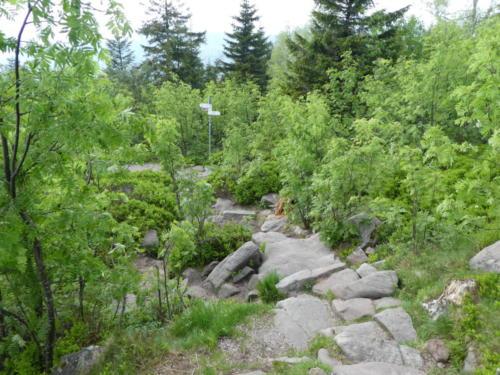 Abstieg über Felsen von der Hornisgrinde
