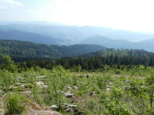 Ausblick von der Südlichen Flanke der Hornisgrinde