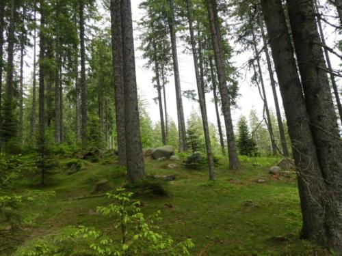 Grüner Waldboden