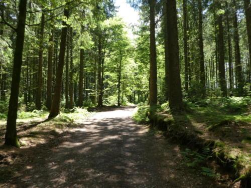 Westweg zwischen Martinskapelle und Brend