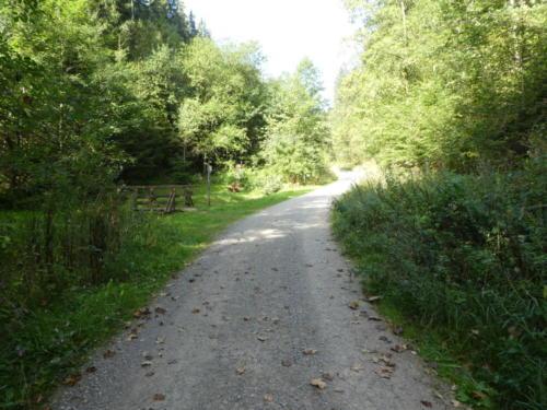 Forstweg mit Picknickbank bei Wildemann