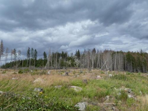Blick über den Harz