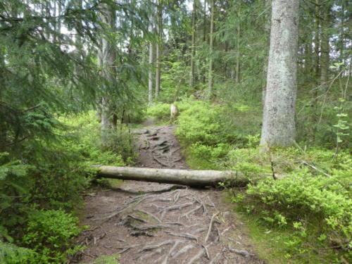 Auch muss mal ein Baum überwunden werden...
