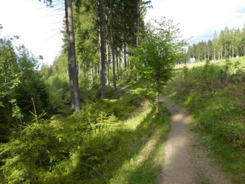 Noch ein mal ein schöner Waldweg...