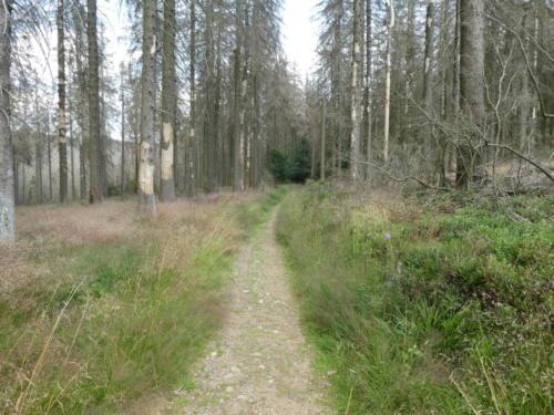 Wanderweg entlang des Erdbeerkopf