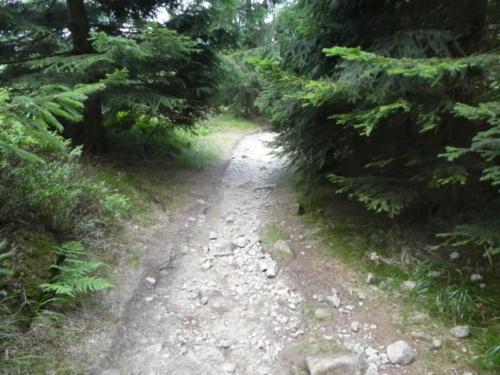 Abstieg vom Erdbeerkopf Richtung Schutzhütte Spinne