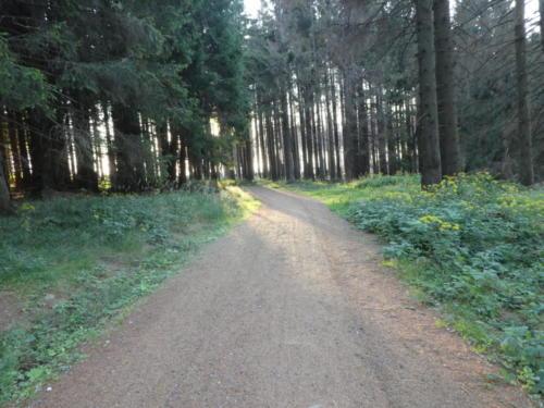 Wald vor Drei Annen Hohne