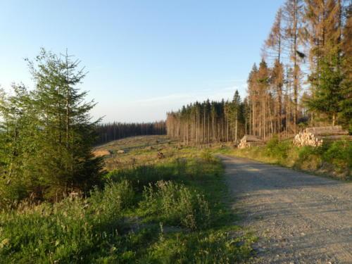 Morgendliche Aussicht überhalb von Drei Annen Hohne