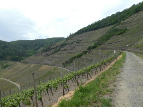 Der Weg führt durch die Weinfelder