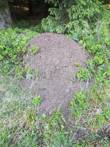 Ameisenhügel, davon gab es eine ganze Menge