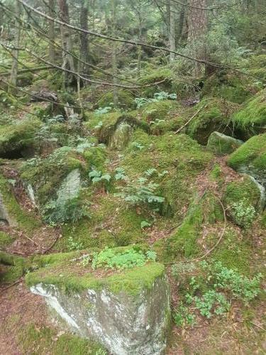Steine mit Moss entlang des Weges