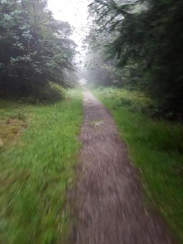 Einsame Pfade im Nebel