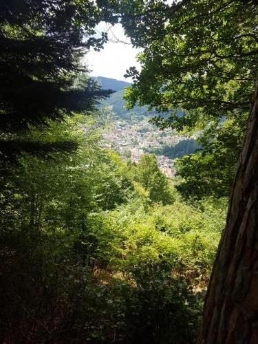 Ausblick auf Forbach