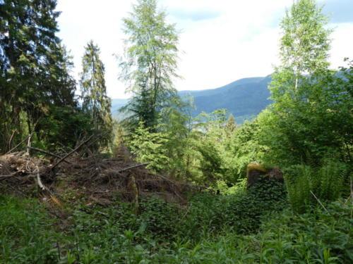 Blick von der Wegscheidhütte Richtung Forbach