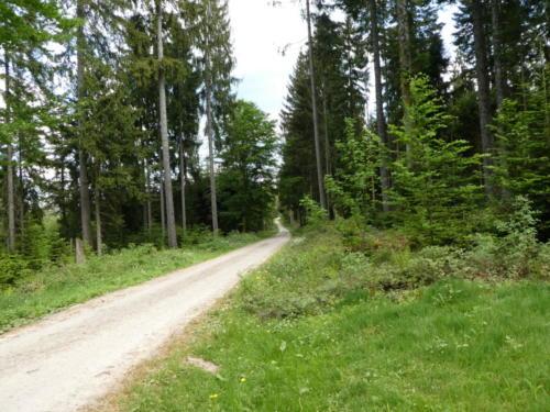 Weg zur Wegscheidhütte