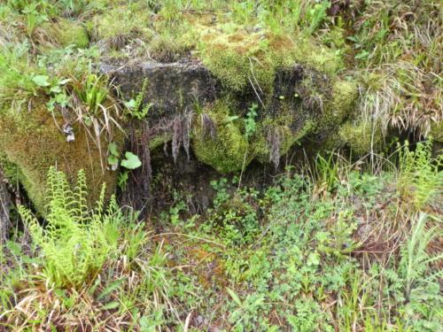 Moosbewachsene Steine am Schwarzenbachstausee