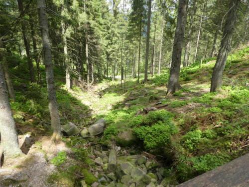 Moosbewachsene Felsen im Bachbett am Aufstieg zur Hornisgrinde