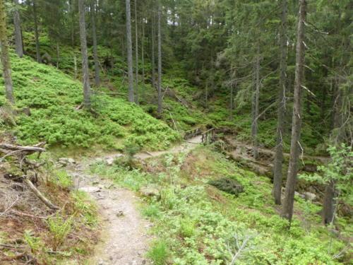 Schmale steinige Pfade am Aufstieg zur Hornisgrinde