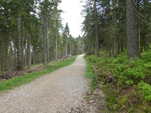 Zur Abwechslung mal ein Waldweg
