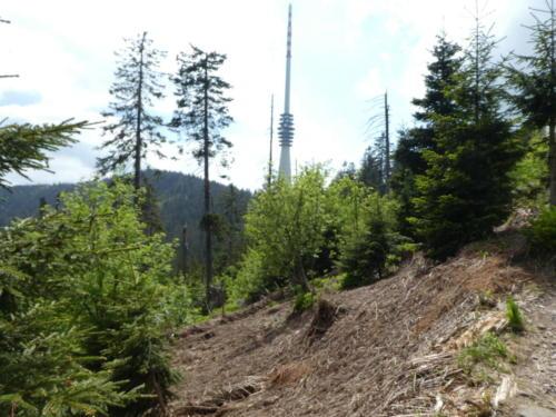 Blick zum SWR-Funkturm auf der Hornisgrinde