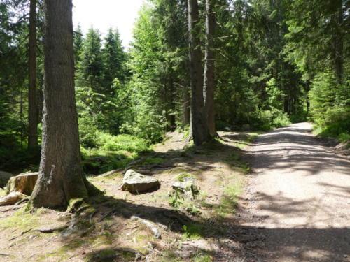 Aufstieg nahe der Elzquelle