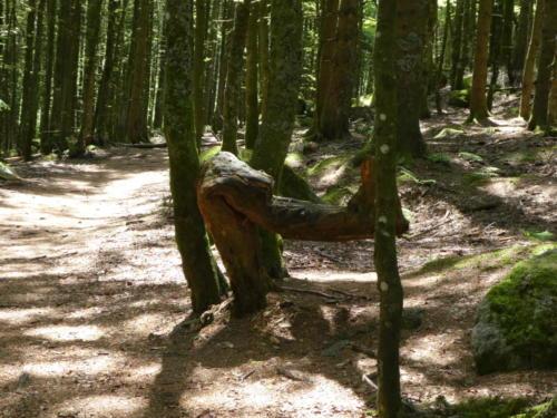 Sitzholz nahe Günterfelsen